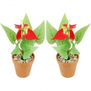 Wonderland Anthurium with plastic pot in Red (Set of 2)