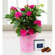 Mother's Day Roses - Free Chocs