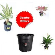 Combo of Dryclean Live Nature Plant with Freebie