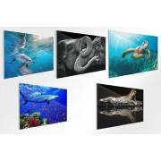 VakantieVeilingen.be Wilde dieren op glas (40 x 60 cm)