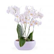 Interflora Centro de plantas de Phalaenopsis blancas - Flores a Domicilio