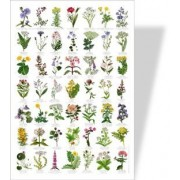 Buzz Common Wild Flowers Poster - 49 European Flower Images