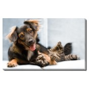 Tablou Canvas Kitten and Puppy