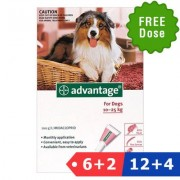 Advantage Large Dogs 21-55lbs (Red) 12 Dose + 4 Doses Free