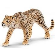 Leopard cu pete