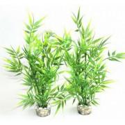 Plante Sydeco Scarlet Maxi - 39cm 350133