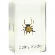 Preparat Spiny Spider