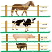 Gemi Elettronica Fettuccia 8mm 400 MT per Recinzione Elettrica Recinti Elettrici Recinti Elettrificati Recinzioni Elettrificate per animali cavalli cani mucche maiali galline