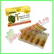 Gemoderivat din Muguri de Alun 30 monodoze - Hofigal
