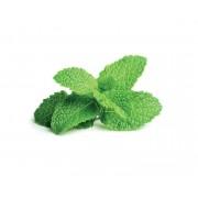 Recharge triple de Menthe poivrée pour Smart Garden - Click and Grow