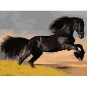 Gaira Malování podle čísel Černý kůň M1498