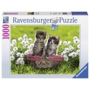 Ravensburger puzzle pisicute in cosulet, 1000 piese