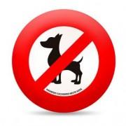 Almofada Proibido Cachorro Neste Sofa Redonda
