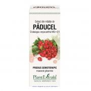 Extract din Mladite de Paducel 50 ml PlantExtrakt