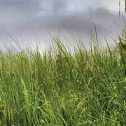 Dell LED monitor Dell P2720D, 68.6 cm (27 palec),2560 x 1440 px 5 ms, IPS LED HDMI™, DisplayPort, USB 3.0, USB 2.0