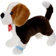 Beagle stehend