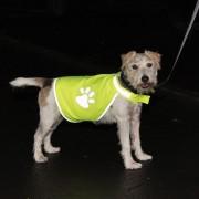 Safety-Dog Vestă reflectorizantă de siguranță - Mărimea S: 24 cm lungimea spatelui