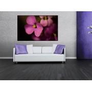 Tablou canvas floare mov - cod L08