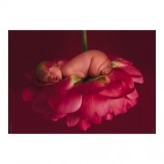 Educa Anne Geddes, Chelsey puzzle, 500 darabos