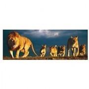 Educa 1000 piece Panorama Lion Family Puzzle