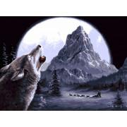 Gaira Malování podle čísel Vlk M1598