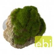 EBI AQUA DELLA MOSS STONE -S- ca.12x9,5x10,5cm with suction cup