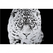 MondiArt Alu Jaguar zwart/wit 1062181