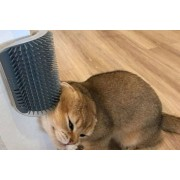 Suzhou Dashijie Electronics Co., Ltd £5.99 instead of £19.99 for a cat grooming comb from Secretstorez - save up to 70%