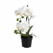 FLORISTA orchidea kaspóban fehér 35cm