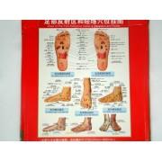 Plansa picior pentru reflexoterapie si acupunctura (cod H03)