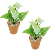 Wonderland Anthurium with plastic pot in white (Set of 2)