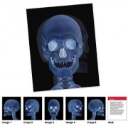 Learning Resources New View Science - Human Body Card Set