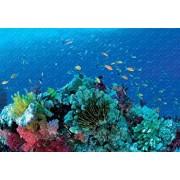 PigBangbang Animal Fish 1000 Rompecabezas de Gran Pieza de 29.5 x 19.6 Pulgadas, Material de Madera
