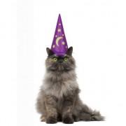 Geen Magier hoed voor katten