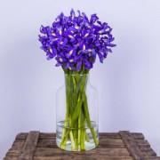 Blue Magic - Flores a domicilio