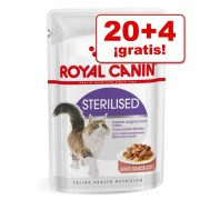 Royal Canin 24 x 85 g en oferta: 20 + 4 sobres ¡gratis! - Kitten Instinctive en salsa