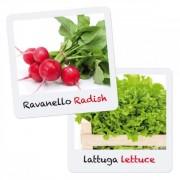 SET CREATIV PENTRU COPII GIOCA GREEN PLANTARE SI CRESTERE SALATA RIDICHE - QUERCETTI (Q0680)