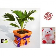ES TABLE PALM GREEN WITH FREE COMBO GIFT - 6 inchTEDDYBEAR