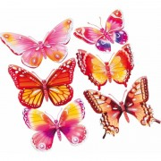 Geen 3D stickers vlinders roze/oranje 6 stuks