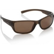 Polaroid Round Sunglasses(Brown)