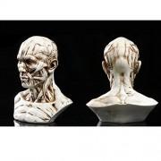 "ELECTROPRIME 4"" Human Model Anatomy Skull Head Muscle Bone Artist Drawing Antique White"