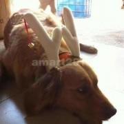 Alcoa Prime 11cm Dog Pet Cat Christmas Reindeer Antlers Headwear Costume Prop Size Small