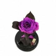 Trandafir Criogenat Fucsia Queen Roses in cupola de sticla