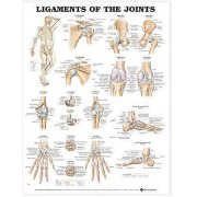Ligaments of the Joints Anatomical Chart par Prepared for publication by Anatomical Chart Company