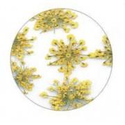 Flores Secas Color-004
