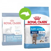 Royal Canin Maxi Puppy / Junior Active - 2 x 15 kg - Pack Ahorro
