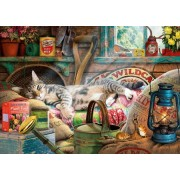 Snoozing in the Shed - Steve Read