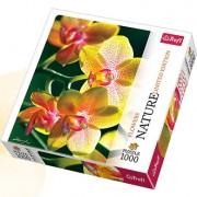 Trefl Puzzle Slagalica Orchid 1000 kom (10503)