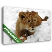 Oroszlán a hóban (40x25 cm, Vászonkép )