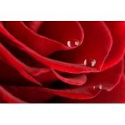 Tapet autocolant -Trandafir rosu 8 Best Decor - 150X225cm